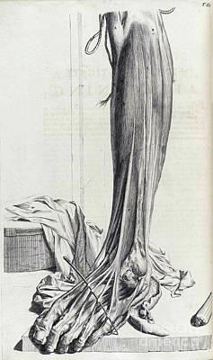 Anatomia Humani Corporis, Table 81, 1690 Poster