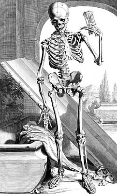 Anatomia Humani Corporis, Table 87, 1690 Poster by Science Source