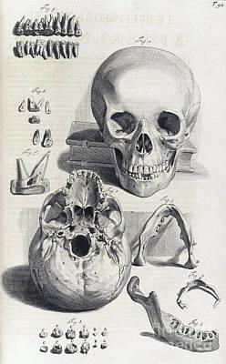 Anatomia Humani Corporis, Table 92, 1690 Poster