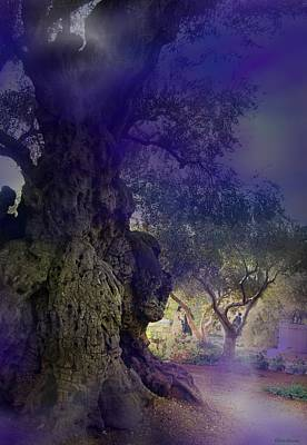 Poster featuring the photograph Ancient Witness Tree Garden Of Gethsemane Vision by Anastasia Savage Ealy