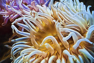 Anemone Flower Poster