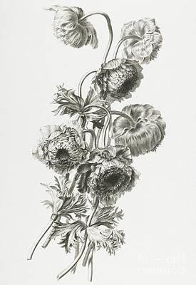 Anemones Poster by Gerard van Spaendonck