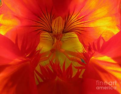 Angel In A Nasturtium Poster by James B Toy