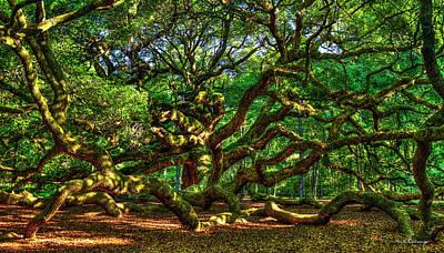 Angel Oak Morning Shadows Charleston South Carolina Poster