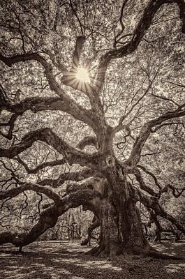 Angel Oak- Sun Beam  Poster by Drew Castelhano
