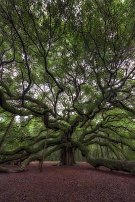 Angel Oak Tree, Charleston, Sc Poster