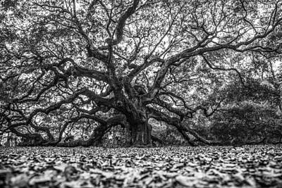 Angel Oak Tree In B And W Poster