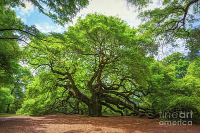 Angel Oak Tree In South Carolina  Poster