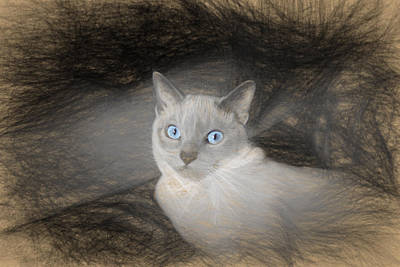 Angel Sketch With Blue Eyes Poster by Linda Phelps