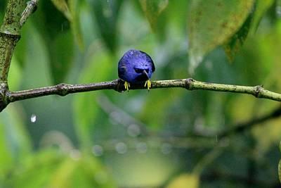 Poor Hummingbird Caught In The Rain Poster