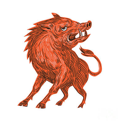 Angry Razorback Ready To Attack Drawing Poster