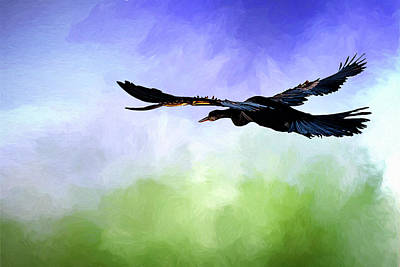 Anhinga In Flight Poster by Cyndy Doty