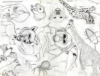 Animal Collage Poster by Gerard  Schneider Jr