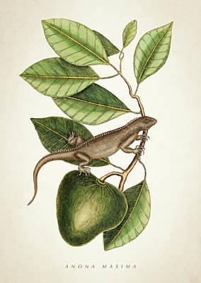 Anona Maxima Botanical  Poster
