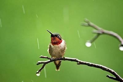 Another Rainy Day Hummingbird Poster
