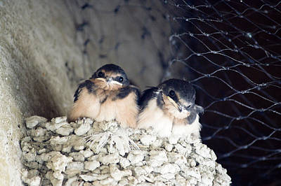Antelope Island Birds Poster by Linda Dunn