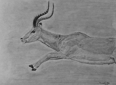 Antelope Leap Poster by Hanunyah Fish