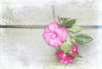 Antique Camellias Poster