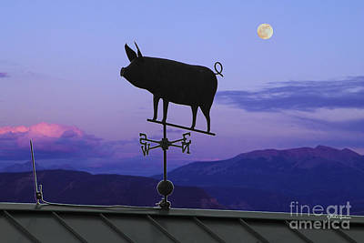 Antique Flying Pig Weathervane At Twilight Poster by Dale Jackson