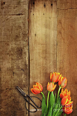 Poster featuring the photograph Antique Scissors And Tulips by Stephanie Frey