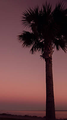 Apalachicola Palm Poster