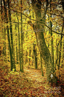 Poster featuring the photograph Appalachian Trail In The Blue Ridge In Autumn Ap by Dan Carmichael