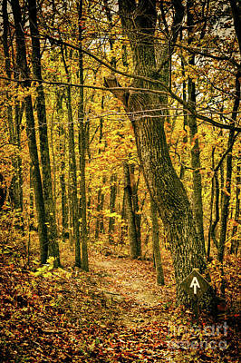 Poster featuring the photograph Appalachian Trail In The Blue Ridge In Autumn by Dan Carmichael