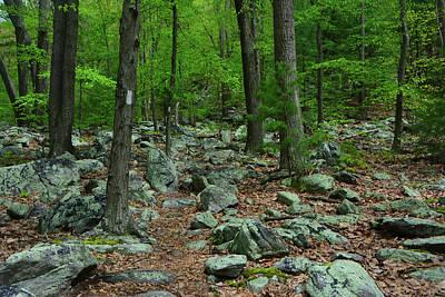 Appalachian Trail With Moss Covered Rocks Poster by Raymond Salani III