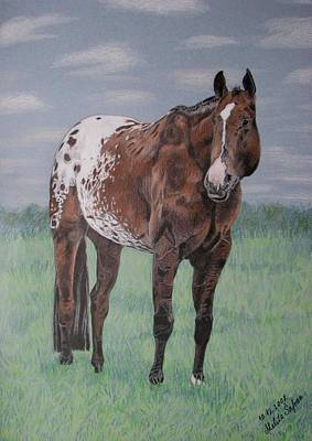 Poster featuring the drawing Appaloosa by Melita Safran