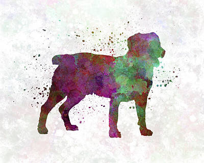 Appenzell Cattle Dog In Watercolor Poster