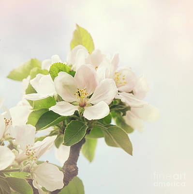 Apple Blossom Retro Style Processing Poster