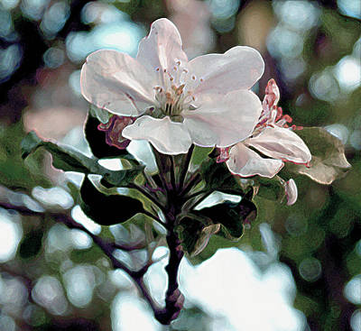 Poster featuring the painting Apple Blossom Time by RC DeWinter