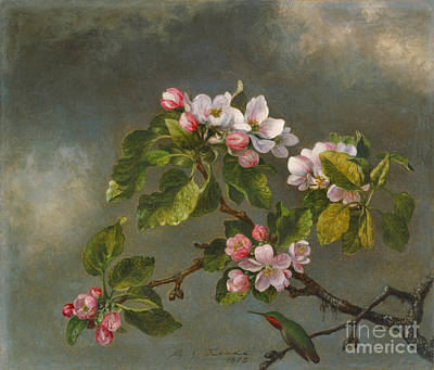Apple Blossoms And Hummingbird 1875 Poster by Padre Art