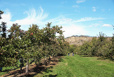 Poster featuring the photograph Apple Picking by Jose Rojas