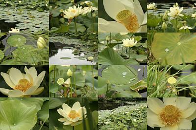 April Lotus Pond Poster