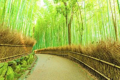 Arashiyama Bamboo Forest Curved Footpath Nobody H Poster