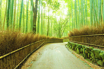 Image result for arashiyama bamboo grove