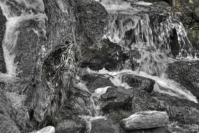 Arboretum Waterfall Bw Poster