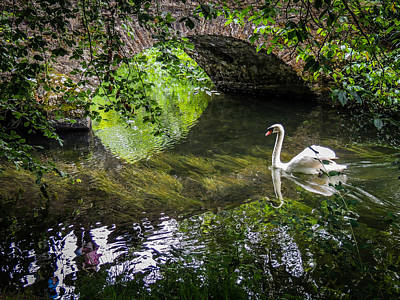Arched Bridge And Swan At Doneraile Park Poster