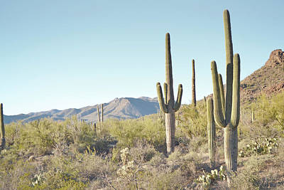 Arizona Cactus Blue Sky Landscape Poster by Andrea Hazel Ihlefeld