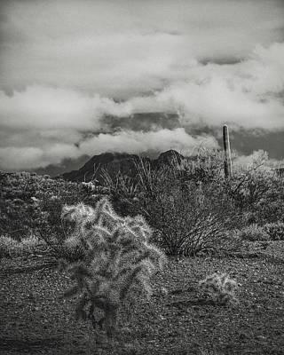 Arizona Desert B-w Poster