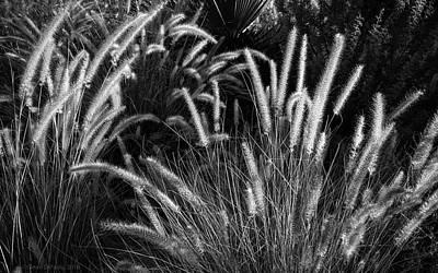 Arizona Desert Grasses Poster