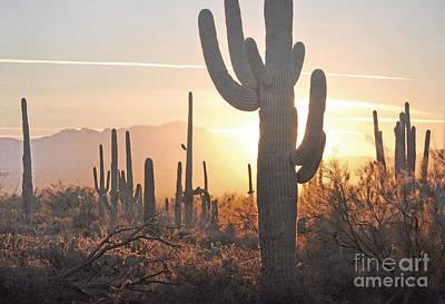 Arizona Saguaro Cactus Sunset Desert Landscape Poster by Andrea Hazel Ihlefeld