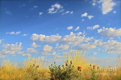 Arizona Sky And Golden Grass Poster by Gus McCrea