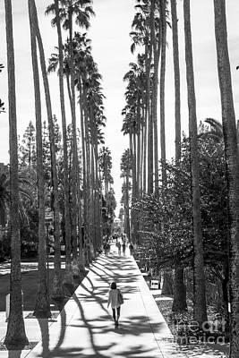 Arizona State University Palm Walk Poster by University Icons