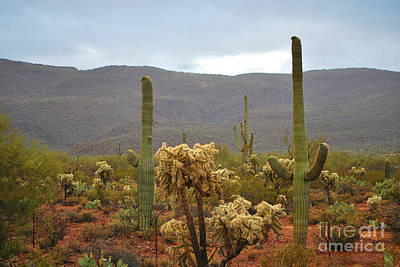 Poster featuring the photograph Arizona's Sonoran Desert  by Donna Greene