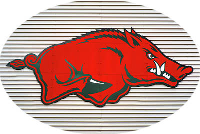 Arkansas Razorback On Metal With White Border Poster
