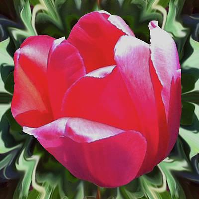 Arlington Tulip Poster