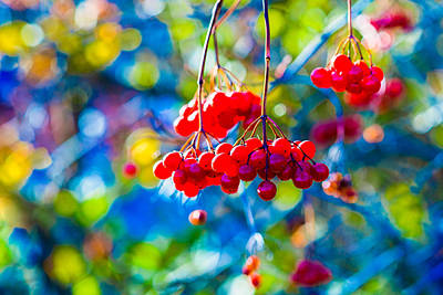 Poster featuring the photograph Arrowwood Berries Abstract by Alexander Senin