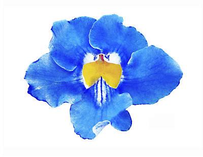 Art Blue Beauty Poster